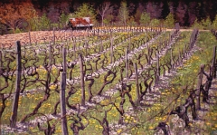 De wijngaarden van Prébois, olieverf, 24 x 38 cm, 5/2001, huile, Vigne de Prébois