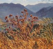 Distel op de Col du Thaud, olieverf, 19 x 21 cm, 8/2012, huile, Chardon sur le Col du Thaud