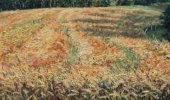 Korenveld in Villard Touage, olieverf, 18 x 31 cm, 7/2013, huile, Champ de blé à Villard Touage