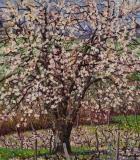 Kersenboom, olieverf, 35 x 31 cm, 4/2019, huile, Le merisier de Mémé