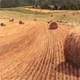 Rollen stro, olieverf, 35 x 35 cm, 8/2005, huile, Balles de paille