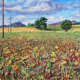 Zonnebloemen, olieverf, 35 x 35 cm, 8/2017, huile, Les tournesols de Louis