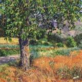 Notenboom, olieverf, 35 x 35 cm, 7/2019, huile, Noyer - Villard Touage