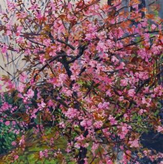 Prunus in bloei, Suikerbakkerssteeg, A'dam, olieverf, 34 x 34 cm, 5/2016, huile, Amsterdam