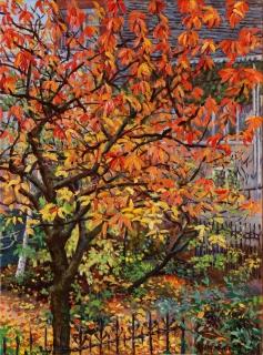 De boom van de buren, olieverf, 37 x 28 cm, 11/2017, huile, L'arbre des voisins