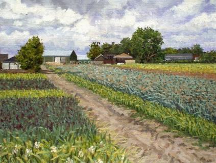 Uitgebloeid bollenveld bij Egmond, olieverf, 19 x 25 cm, 6/2006, huile, Bulbes fanées à Egmond