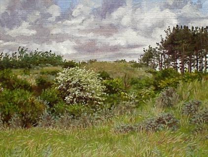 Bloeiende meidoorn bij Egmond, olieverf, 19 x 25 cm, 6/2006, huile, Aubépines en fleurs à Egmond