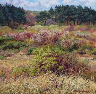 Duinen bij Castricum, olieverf, 35 x 35 cm, 4/2014, huile, Dunes à Castricum